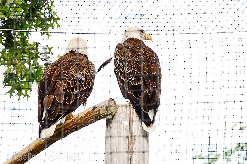 Cape May Zoo10-Edit