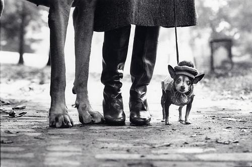 Elliott Erwitt, New York City (Dog Legs), 1974