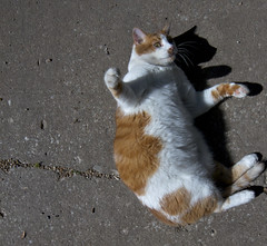 milo sidewalk (davedehetre) Tags: shadow cute cat pose weird paw pavement milo sidewalk dirt roll dust f28 14mm samyang