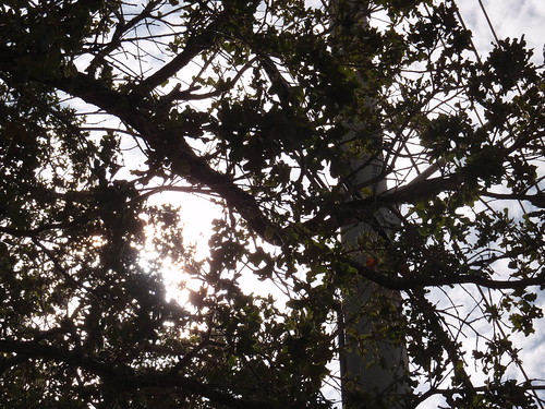 Sunshine Peaking Through Trees