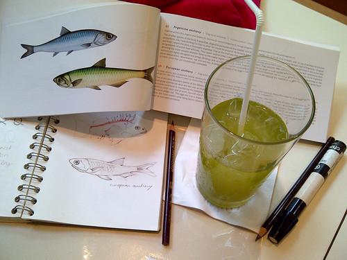 Sketching Fish