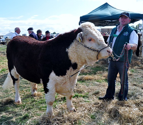 Tullamore Show 2011 685 by Gribers