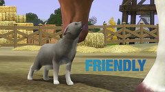 screen-sims-3-pets-pitomci_36_20110816_1291196365