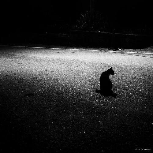 'EmpNely' by Zackri Zim'S