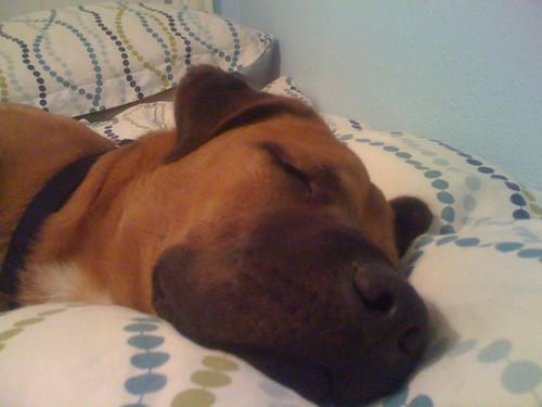 Sleepy Willa