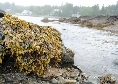 Maine - rocks 2