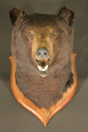 The mounted head of a black bear, by the revered taxidermist Roland Ward, which is expected to achieve between £500 and £700