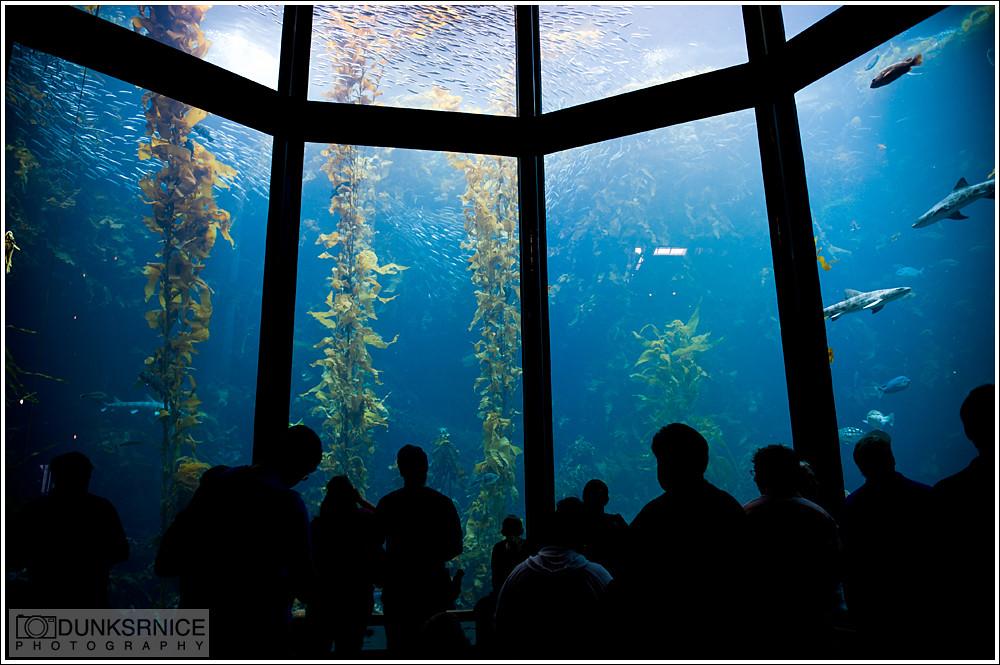 Monterey Bay Aquarium.