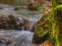 Hanging out by the creek (Mulewings~) Tags: green creek moss olympus waters tonemapped august2011