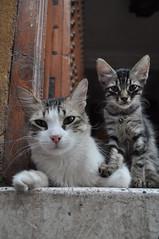 Miao (Lapatia) Tags: africa city sunset cat pussy morocco marocco marrakech gattini marrki