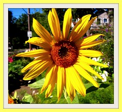 Yellow Makes You Smile (Jim Emery) Tags: flowers fabulous