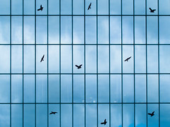 birds in windows (twan-k5) Tags: blue window birds architecture cityscape cityscapes 35faves eair