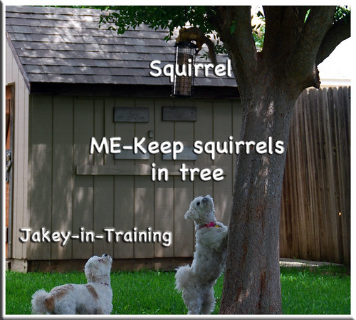 Tree-ed-Squirrel