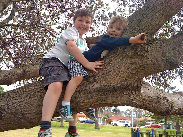 The Boys in the tree