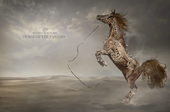 HORSE OF THE FANTASY (suliman almawash) Tags: art digital photoshop niceshot kuwait suliman        almawash mygearandme