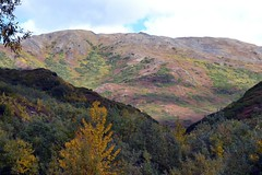 Autumn in Denali - Alaska (blmiers2) Tags: travel autumn mountain mountains fall nature alaska landscape nikon denali d3100 blm18 blmiers2