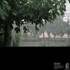 l'acquazzone 1 (paolo.benetti) Tags: nikon italia ferrara albero pioggia giardino temporale fico d300 acquazzone voghiera