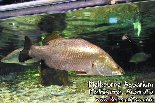 MELBOURNE AQUARIUM-36