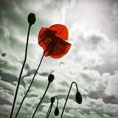 Living in the clouds (Inmacor) Tags: red sky naturaleza flores flower nature clouds contraluz rojo flor explore cielo nubes contrapicado poppie amapola ltytr2 ltytr1 inmacor blinkagain bestofblinkwinner bestofblinkwinners blinkagainsuperstars blinksuperstar blinksuperstars