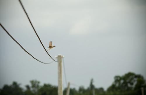 vietnam_bird