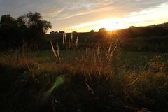 Dorset_3843