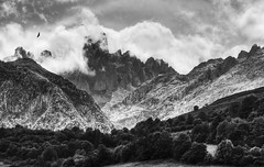 Esclavo del lugar y el momento. / Slave of place and the moment. (Oscar Martn Antn) Tags: espaa mountain clouds de spain europa asturias nubes vulture montaa picos buitre naranjodebulnes
