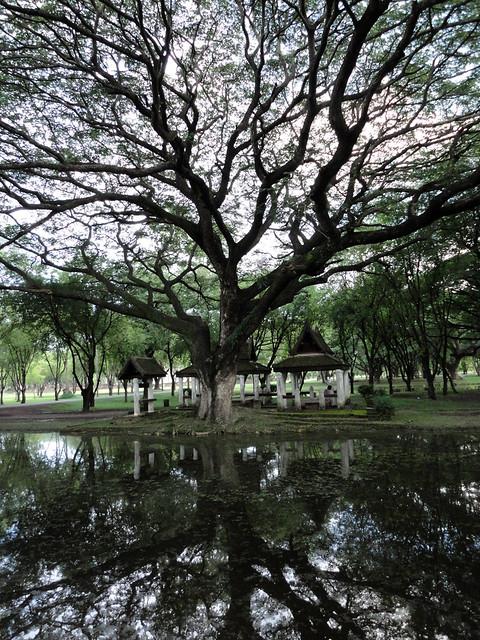 Thailand 5 tree reflection