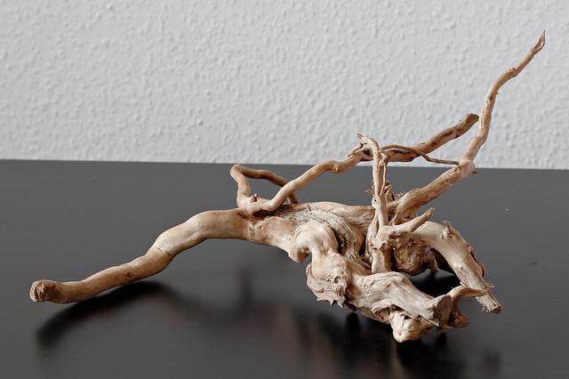 Moor root