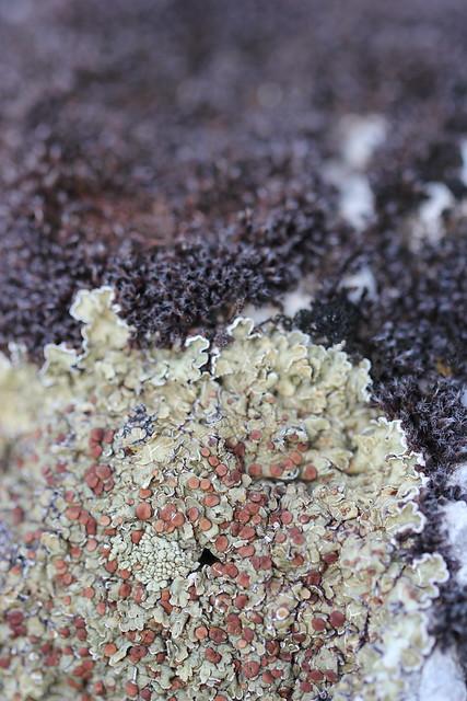 lichenscape