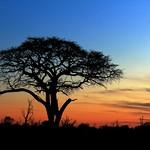 Tramonto, Hwange National Park, Zimbabwe