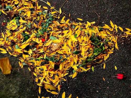 #1 - Leaf Debris I