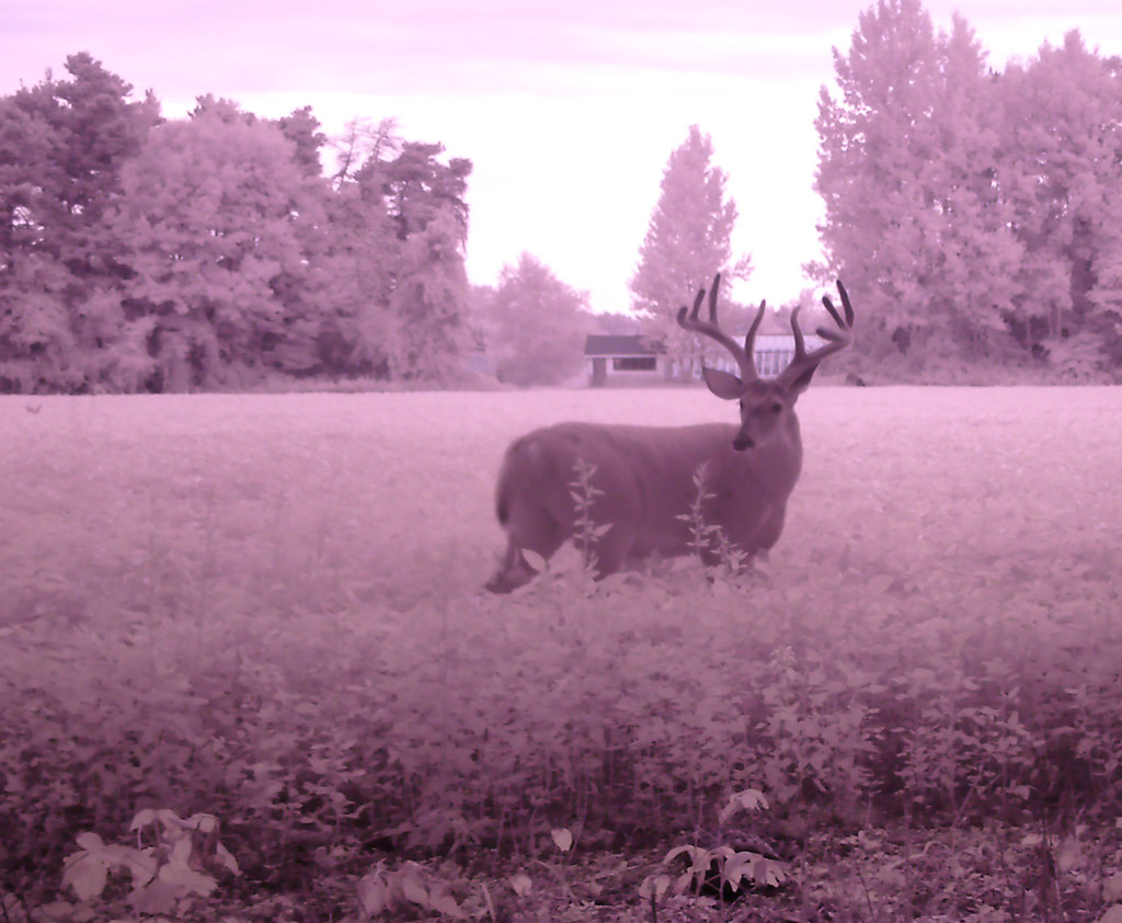 Big Buck #1
