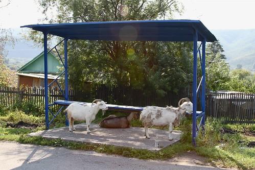 Obluch'e town (Russian Far East)
