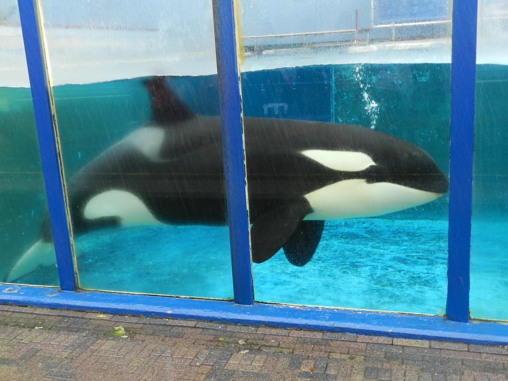 killer captivity