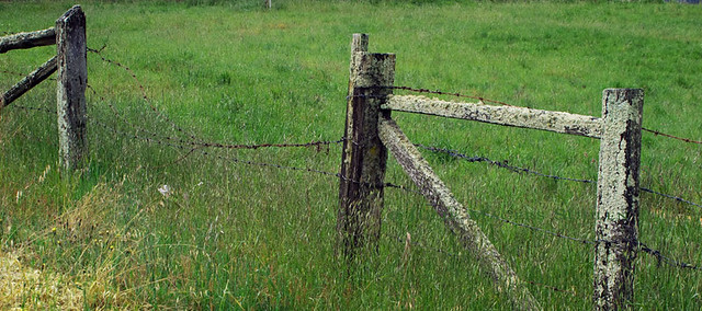 A dilapidated old wooden fence draped in barbed wire and lichen guard the entrance to a field of green grass.