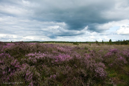 Purple fields by aNNajé still catching up