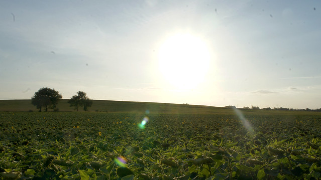 rp-Landscape1