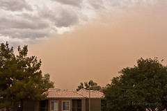 365 Project Arizona Skies 207-365.jpg (tharn photography) Tags: trees arizona sky plants nature phoenix clouds places dust duststorm 2470l ahwatukee haboob arizonaskies 365project tharnphotography