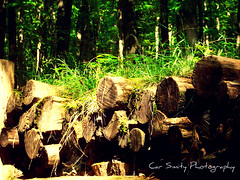 logs, nothing special (Car Smity Photography) Tags: