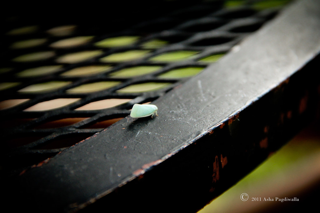 Cute green bug