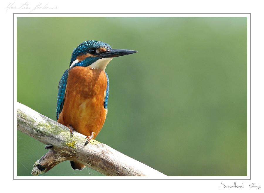 Le Martin pêcheur 6069793535_d97c027c10_b