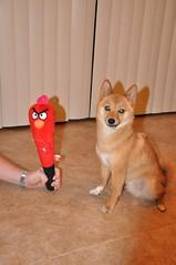 arizona dog pet cute bird toy zombie pooch shibainu shiba dogtoy tempe taro angrybirds mameshiba tar0 tar0shiba taroshiba shibataro shibatar0 tar0theshiba httptar0shibatumblrcom