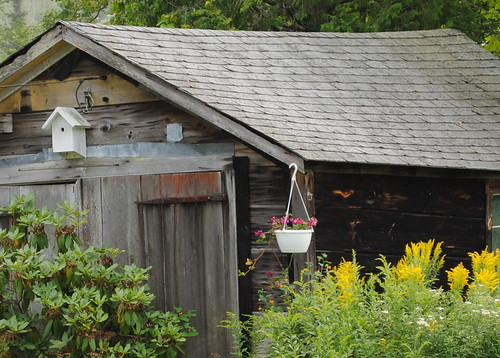 Maine - old shed