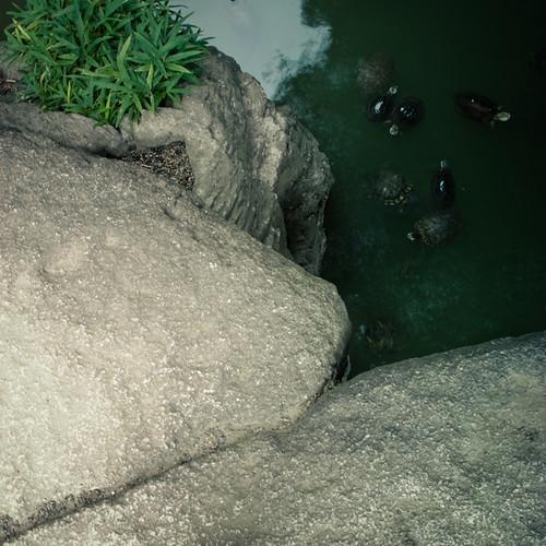 Stone Slab Bridge with Turtles, Rikugien Garden Tokyo