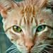 """Cuento """"La importancia del gato en la meditación"""" Anónimo"""