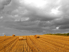Bleak prospects (RainerSchuetz) Tags: field clouds harvest stubblefield baleofstraw