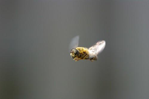 Caught in flight!