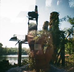 Selfportrait Felled Tree (hedbavny) Tags: selfportrait tree film nature analog 35mm ego lomo lomography natur toycamera autoretrato diana analogue selbstportrait baum plasticcamera felled cutdown gefllt naturschutz lobau wienvienna sterreichaustria farbfilm dechantlacke dianamini internationalyearofforests jahrdeswaldes
