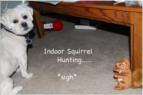 Dory-Indoor-Squirrel-Hunt