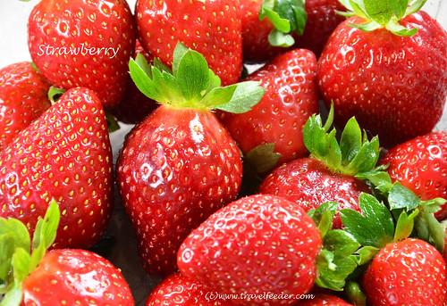 Strawberry farm7